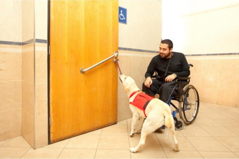 service dog opening bathroom door